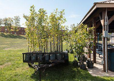 Arbor Day (1 Of 160)